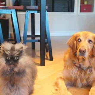 Dog watches cat in fright