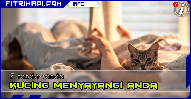 Info 7 Tanda Kucing Menyayangi Anda