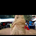 (Video) Watch okemuo (masquerade)unubi displaying at UNUBI okemuo festival 2018