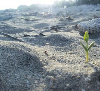 Pasir Putih Pungkruk