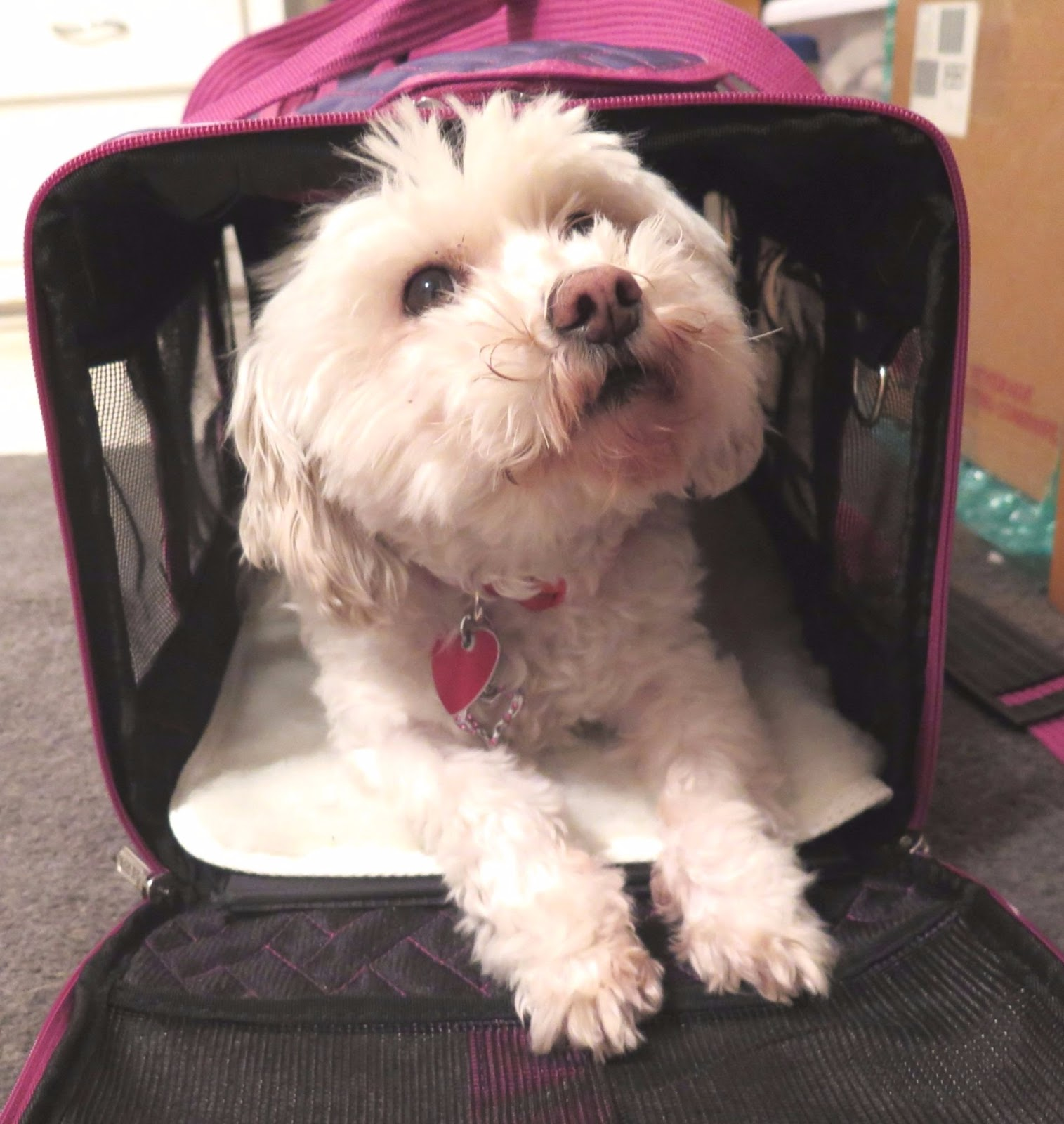 Dogs Luv Us And We Luv Them Tips For Air Travel With Pets