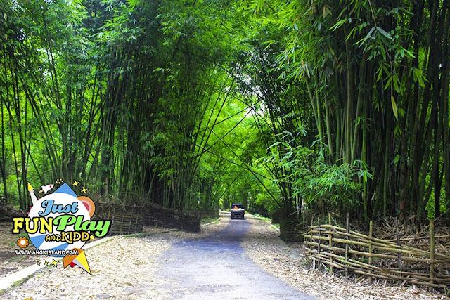 hutan bambu lombok