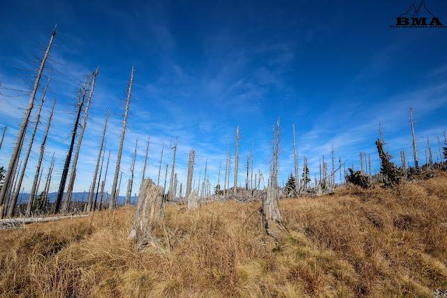 wandern Bayerischer Wald - Wanderung Rachel - Best Mountain Artists - wandern Goldsteig