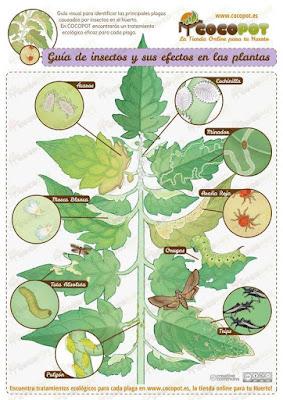 Como identificar plagas de insectos en el huerto para aprender a distinguirlas