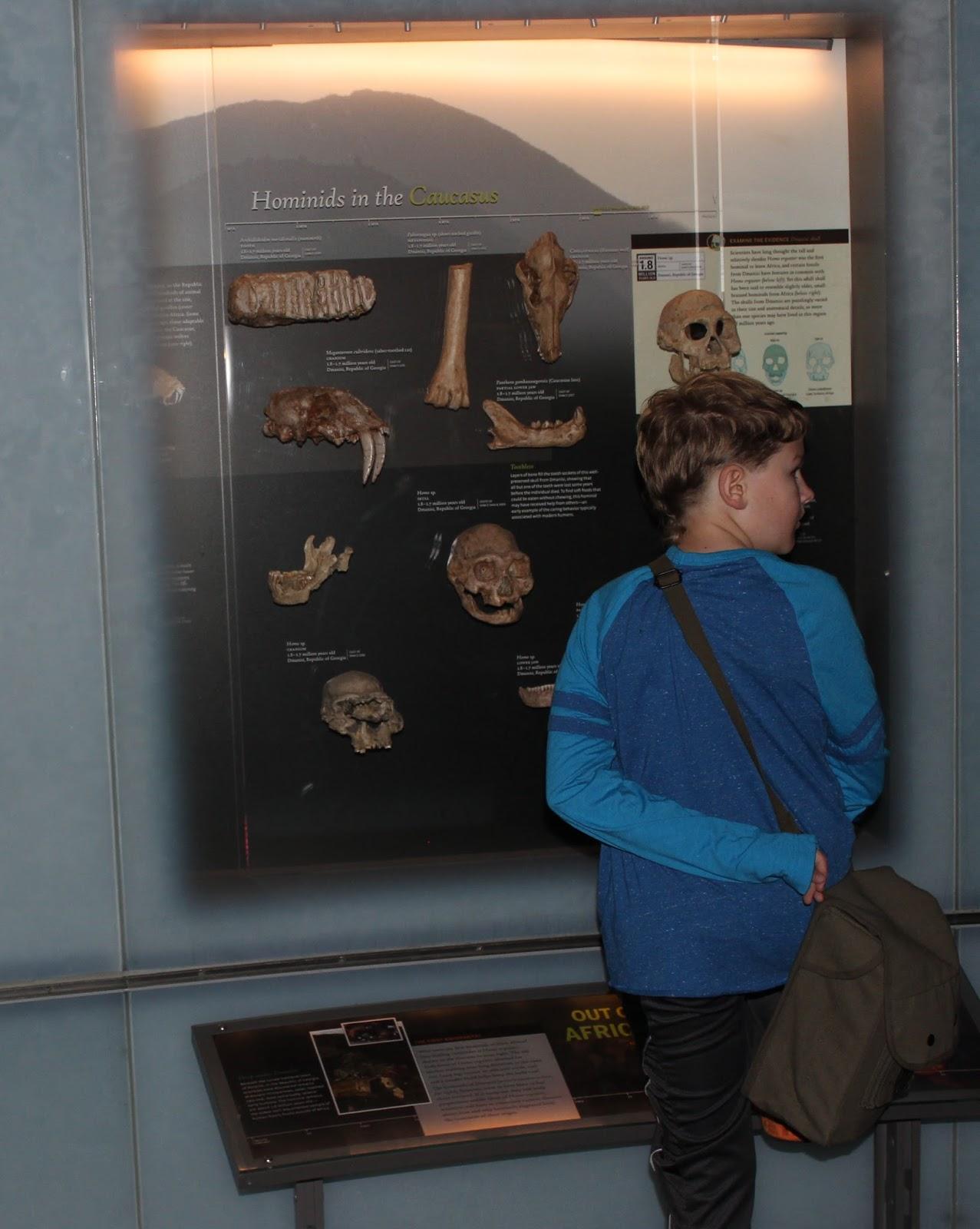 Dottie S Homeschool Universe Wrapping Up Prehistory