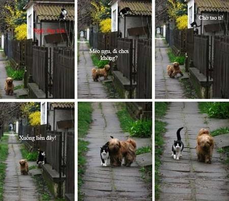 Mèo chó đi chơi