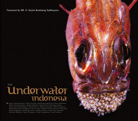 Indra Swari Underwater Photographer