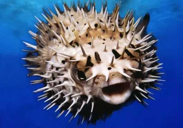 10 Ikan Ini Sangat Berbahaya dan Mematikan Bagi Umat Manusia