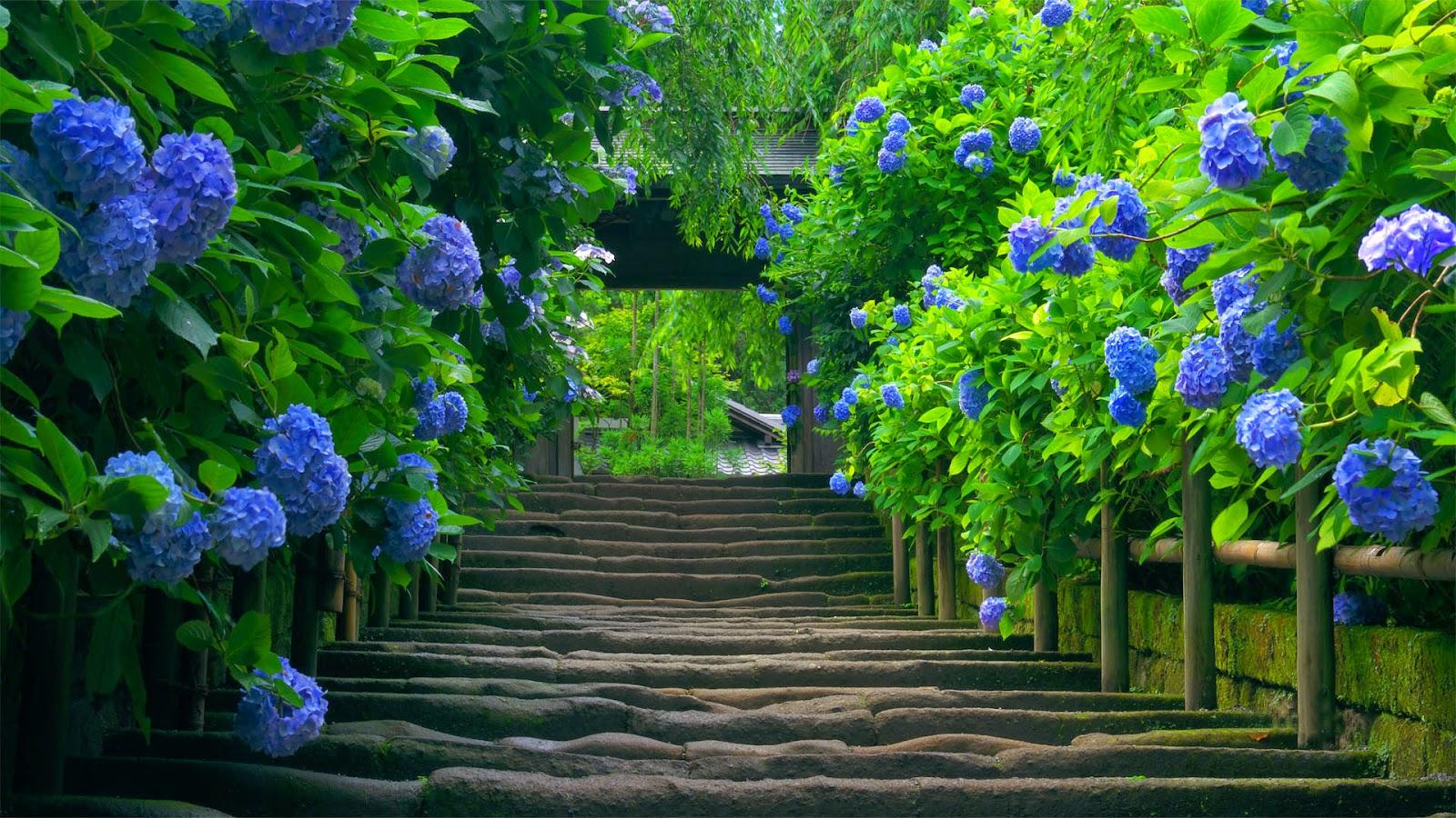 Beautiful Blue Flower Nature Hd Wallpaper Hd Wallpaper Desktop Background