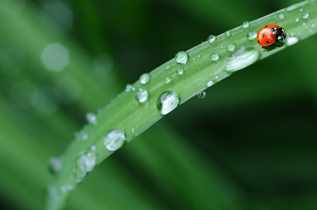 quotes hujan