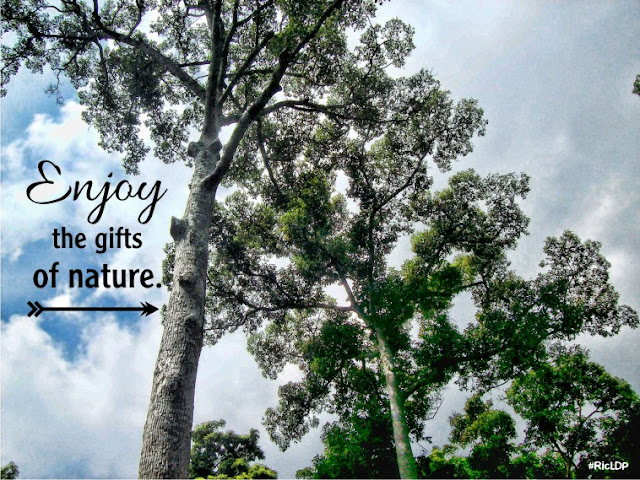 Enjoy the gifts of nature.