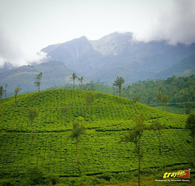 A scene from Wayanad, Kerala