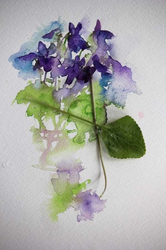 Watercolours With Life Violets In Watercolour 2016
