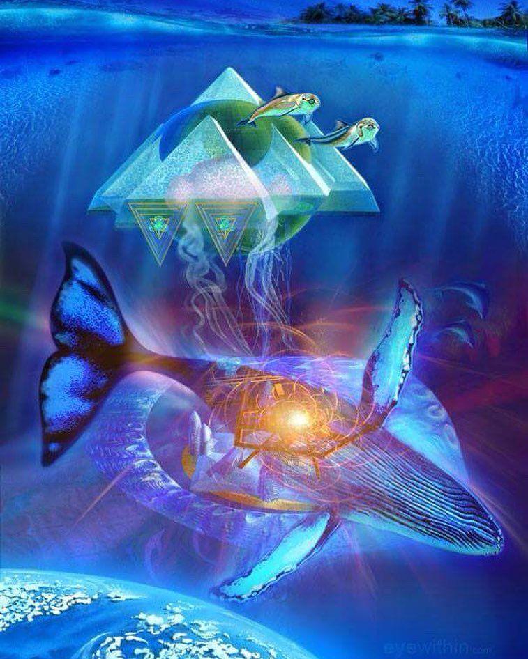 Aktau, emissario dei Delfini: messaggio delle Balene | Spiritualità Suono delle Sfere