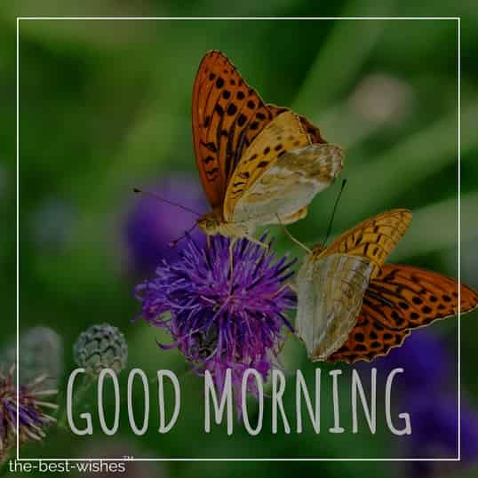 morning monday pictures of flowers and butterflies