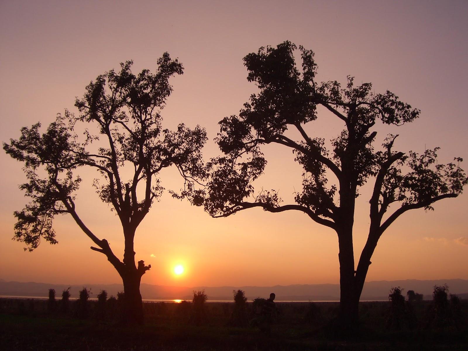 小六語文閱讀理解訓練:《兩棵樹的境遇》|中文筆記|尤莉姐姐的反轉學堂