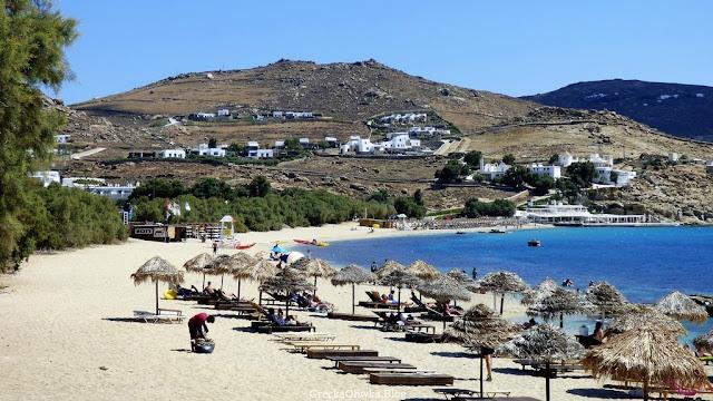 Sosny, słomiane parasole i leżaki na plaży Mykonos. Greckie morze, bezchmurne niebo. Słoneczna pogoda.
