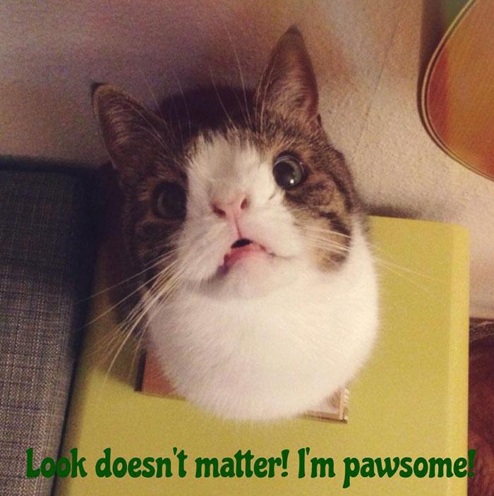 cute-cat-without-nosal-bone-monty