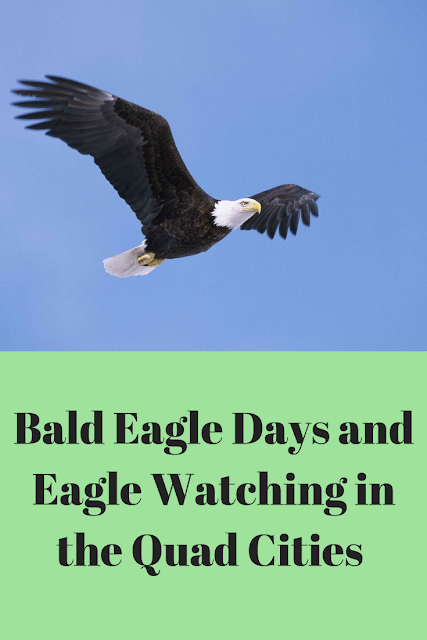 Bald Eagle Watching in the Quad Cities of Illinois and Iowa