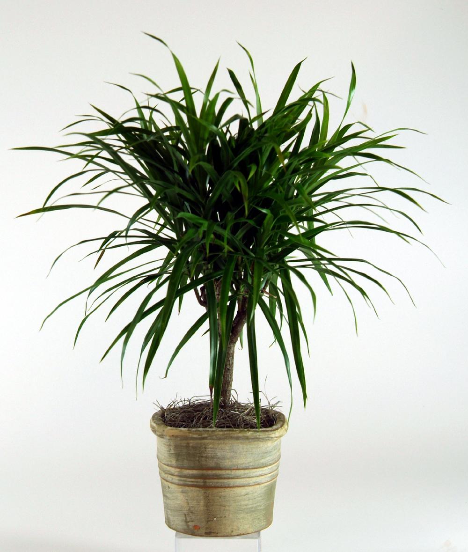 Indoor Houseplants: The Garden Plot: GMG's Friday Find: Celebrate National