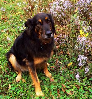 Ottawa Valley Dog Whisperer : NATURAL, HERBAL EAR INFECTION