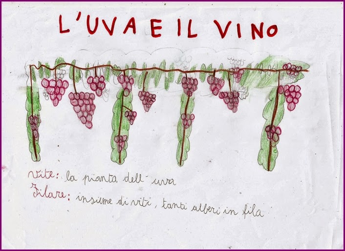 Super Studiamando liberamente: L'uva ed il vino PB12