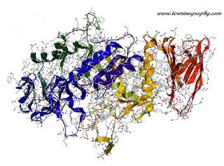 এনজাইম (Enzyme) বনাম প্রোটিন