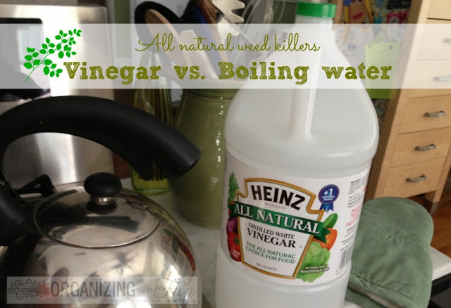 All Natural Weed Killer: Vinegar vs. Boiling Water :: OrganizingMadeFun.com