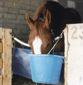 Using neem oil for sweet itch on a horse