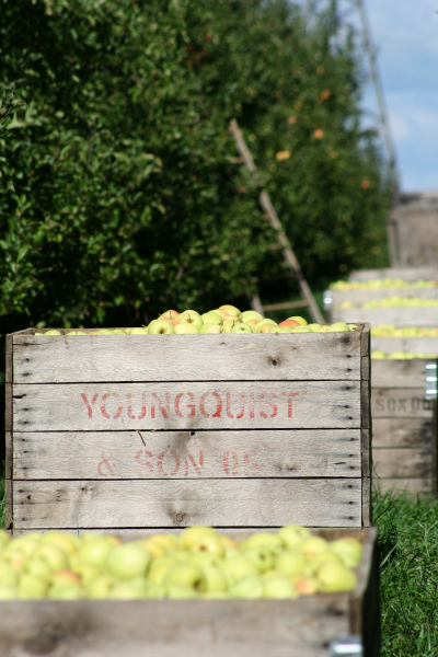 Fruit and Family on the Ridge: Youngquist Farms #MichiganApples
