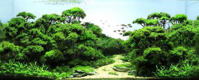 rêu Java tạo hình rừng cây rất đẹp trong hồ thủy sinh