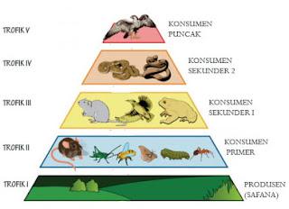 Piramida Rantai Makanan dan Penjelasannya