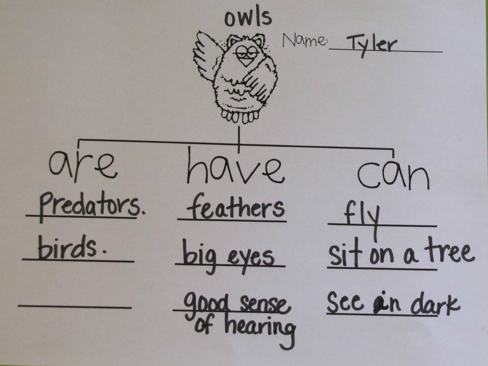 School Time Snippets Fiar Owl Moon