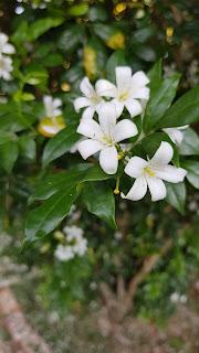white flowers, white garden, flowers garden, white flowers theme, white flowers bouquet, garden