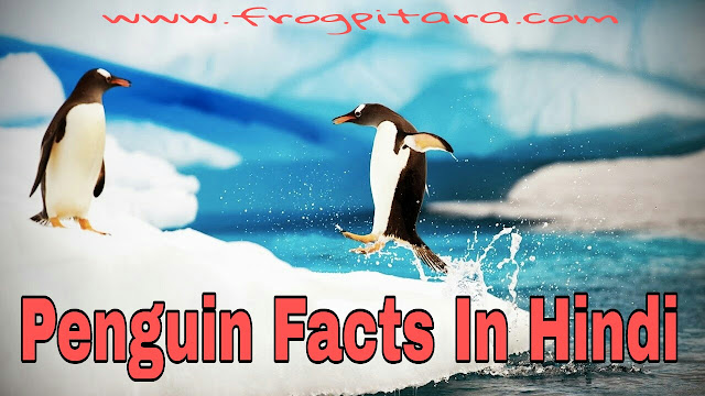 Penguin Facts And Information In Hindi