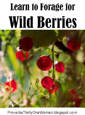 Foraging for Wild Berries, Eating Wild Berries, Picking Wild Berries