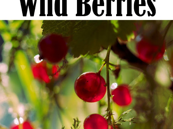 Foraging for Wild Berries