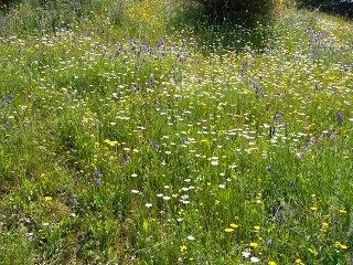 Recetas de plantas silvestres de primavera