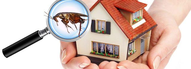 Pest Control in Berwick