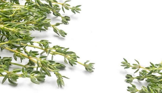 Thyme Skin Care Products benefits