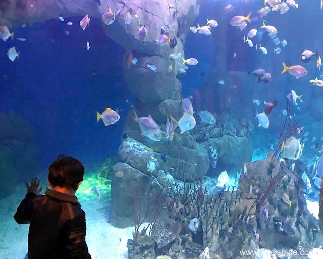 National Marine Aquarium Plymouth