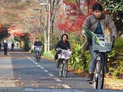 Cycling Tokyo's Tamako Cycling Road
