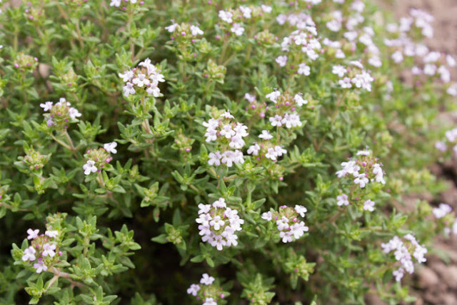 Help Your Brain and Memory by Growing These Magic Plants in Your Garden 59