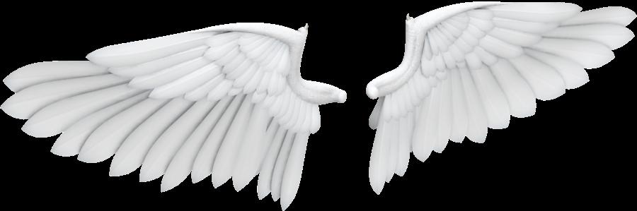 Alitas blancas y - 4 2