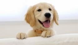 Ποιες ράτσες σκύλων είναι κατάλληλες για να ζουν με τα παιδιά;