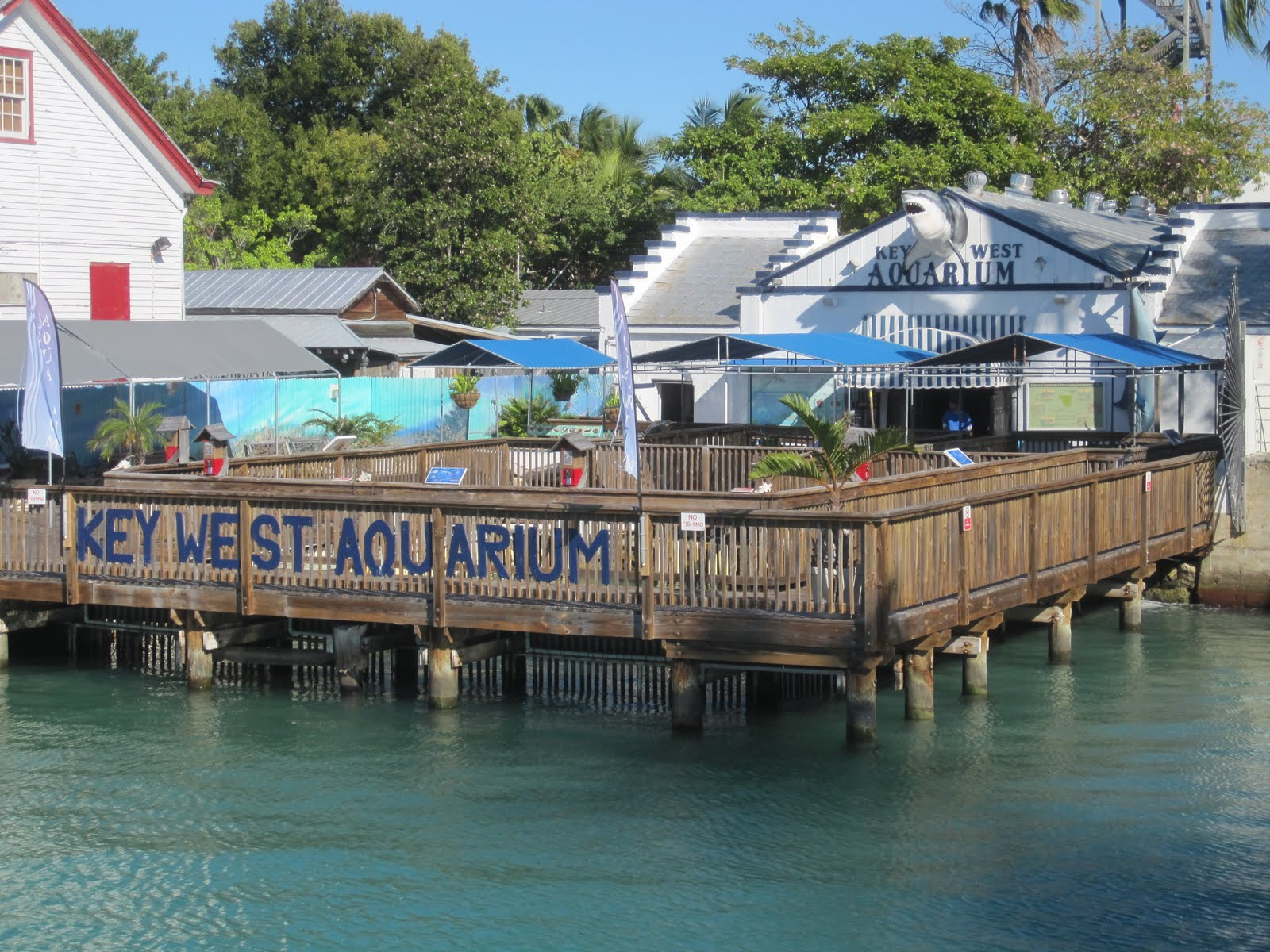 one of the most unique aquariums in the world, the Key West Aquarium
