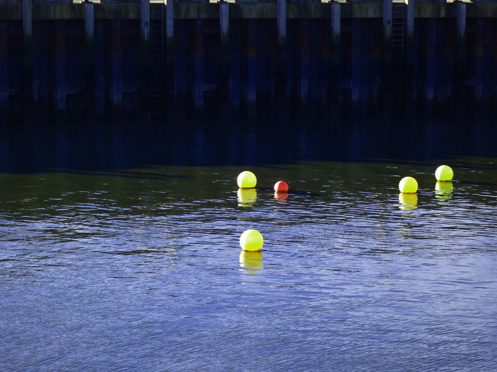 Buoys without boats in West Bay.