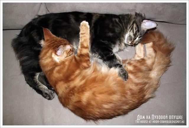 Вышивка коты
