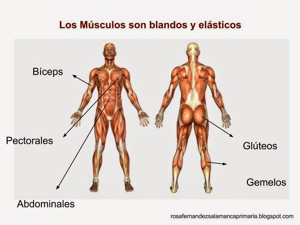 Imagenes Del Esqueleto Y Musculos Del Cuerpo Humano