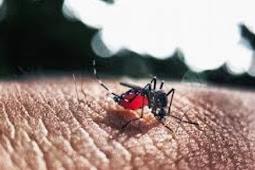 Tanda-Tanda Demam Berdarah Dengue (DBD) dan Faktor Resikonya